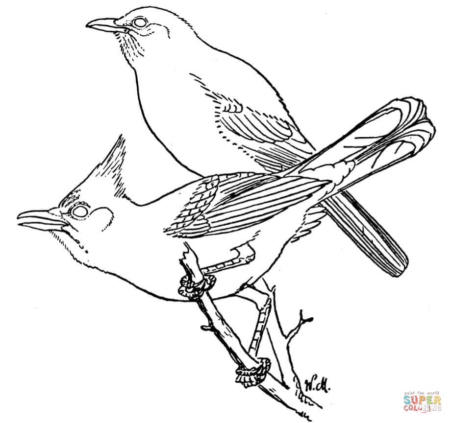 printable coloring pages of blue jays | Blue Jay Drawing at GetDrawings.com | Free for personal ...
