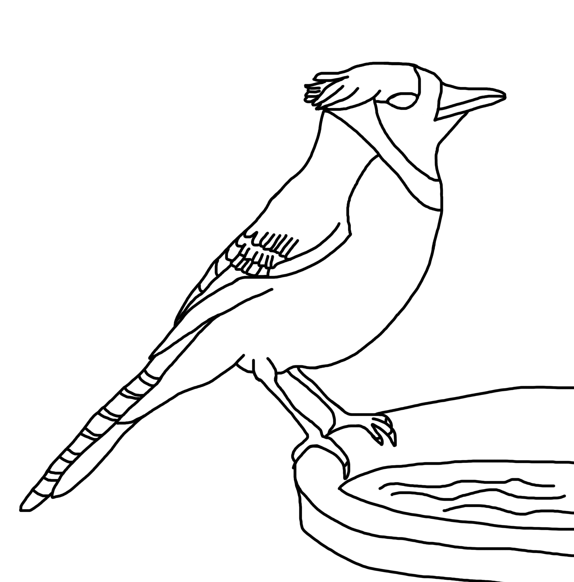 792x612 Blue Jay In Winter Coloring Page 2000x2025 Bluebirds
