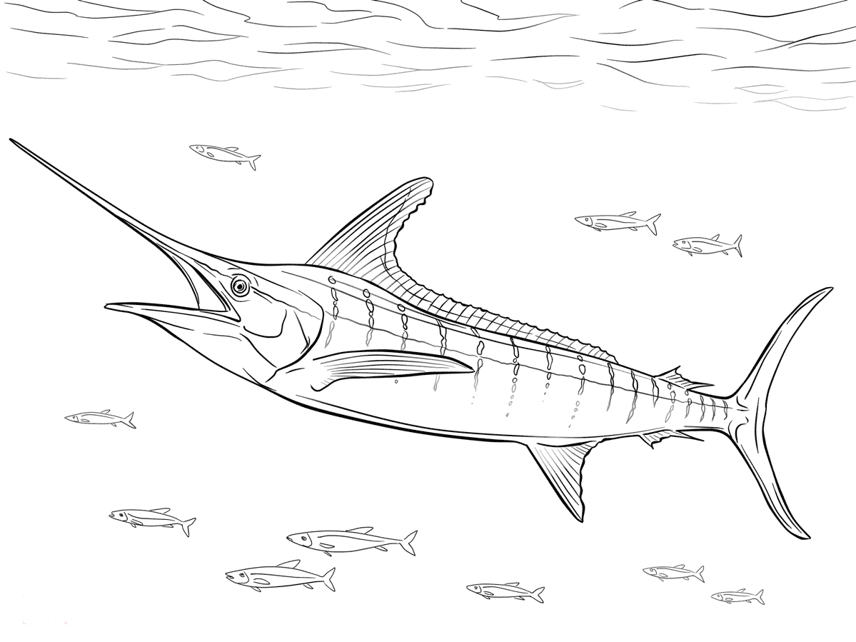 blue marlin drawing at getdrawingscom free for personal