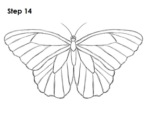 500x386 How To Draw A Butterfly
