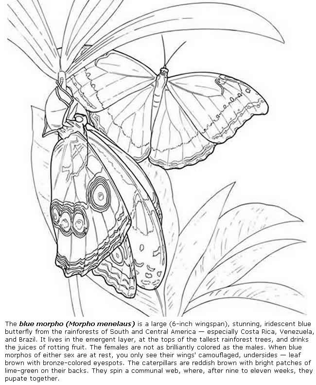 650x790 116 Best Adult Coloring Pages Beautiful Insects Images