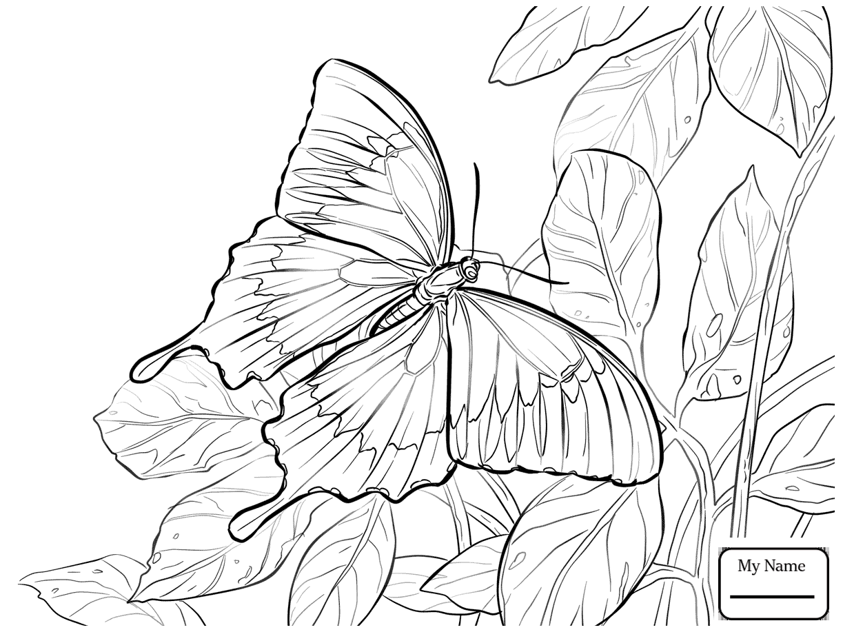 1223x917 Butterfly Butterflies Insects Coloring Pages For Kids