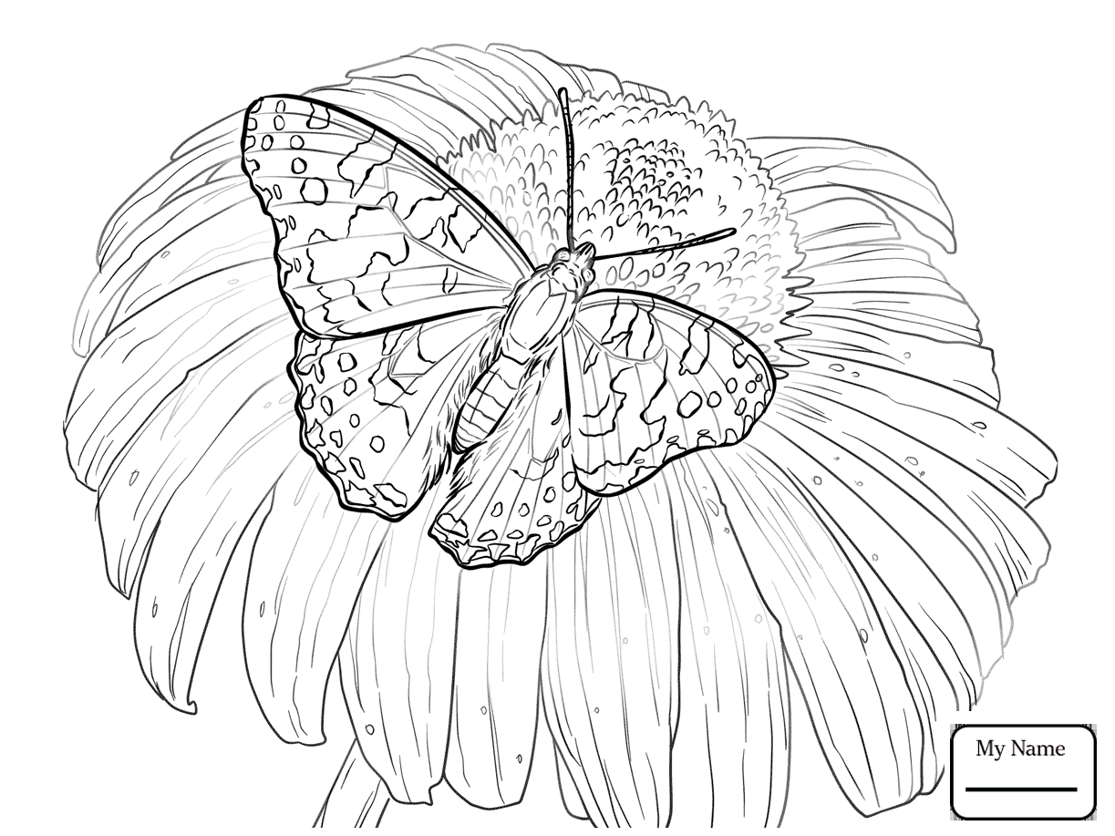 1223x917 Coloring Pages Butterfly Insects Monarch Butterfly