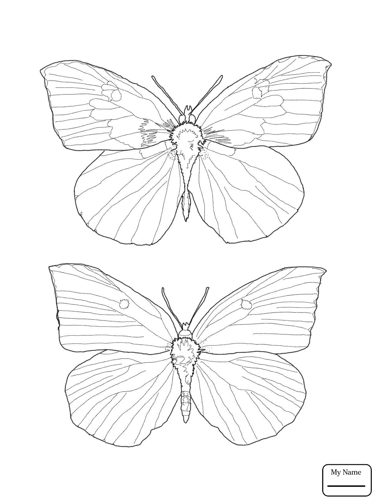 1224x1632 Coloring Pages For Kids Insects Butterfly Butterfly In The Flowers