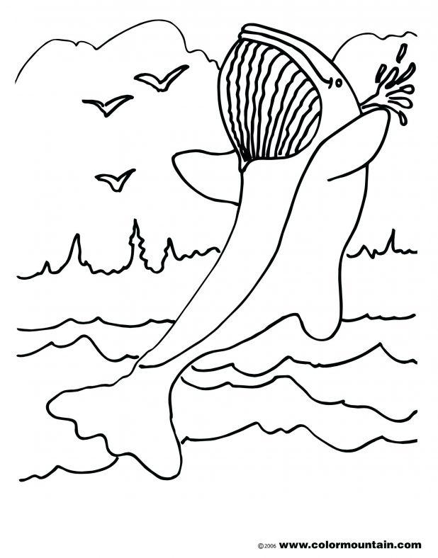 618x788 Killer Whale And Girl Cartoon Whale Mammals Cartoon Whale Coloring