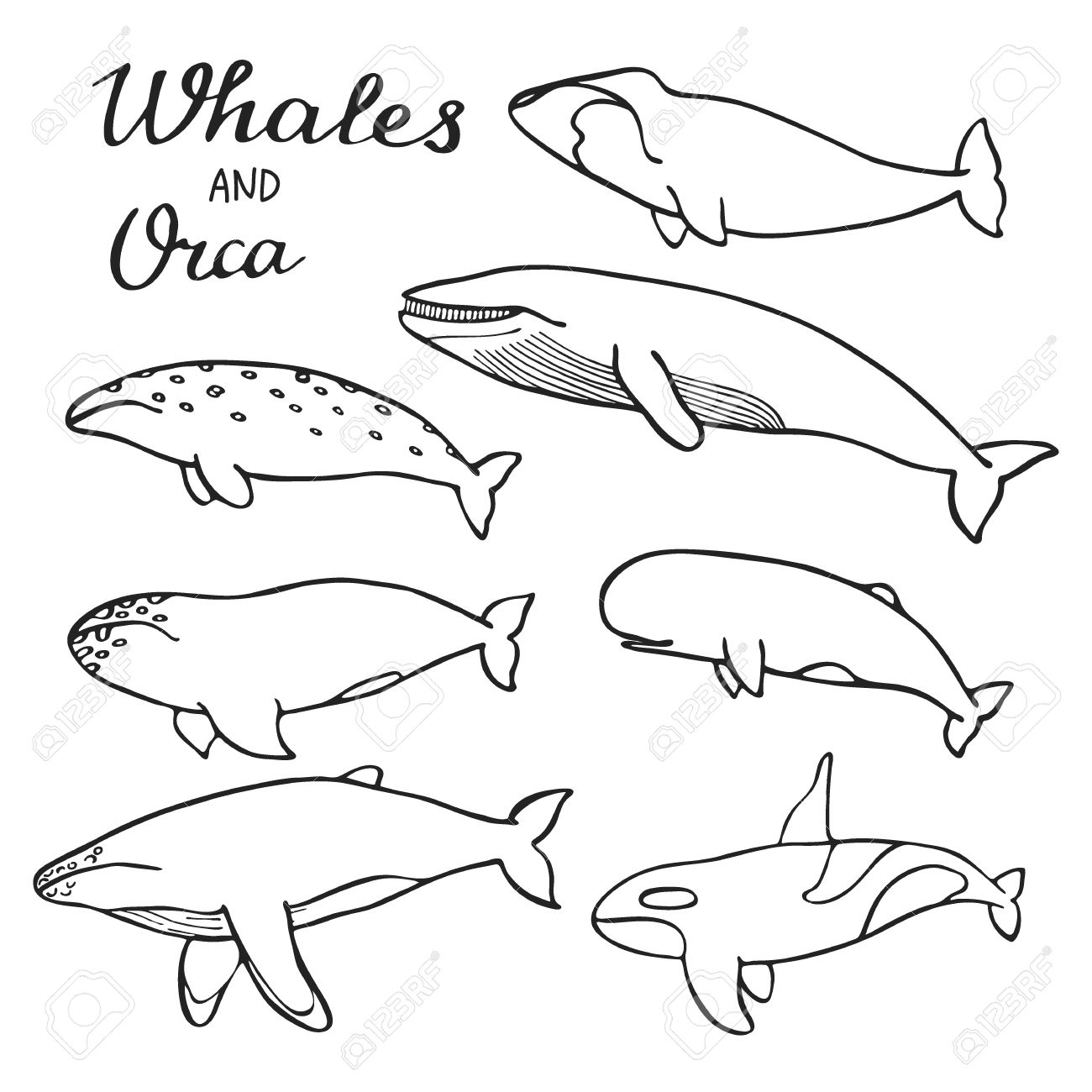 1300x1300 Whales And Orca Set. Hand Drawn Cartoon Collection Of Sea Mammals