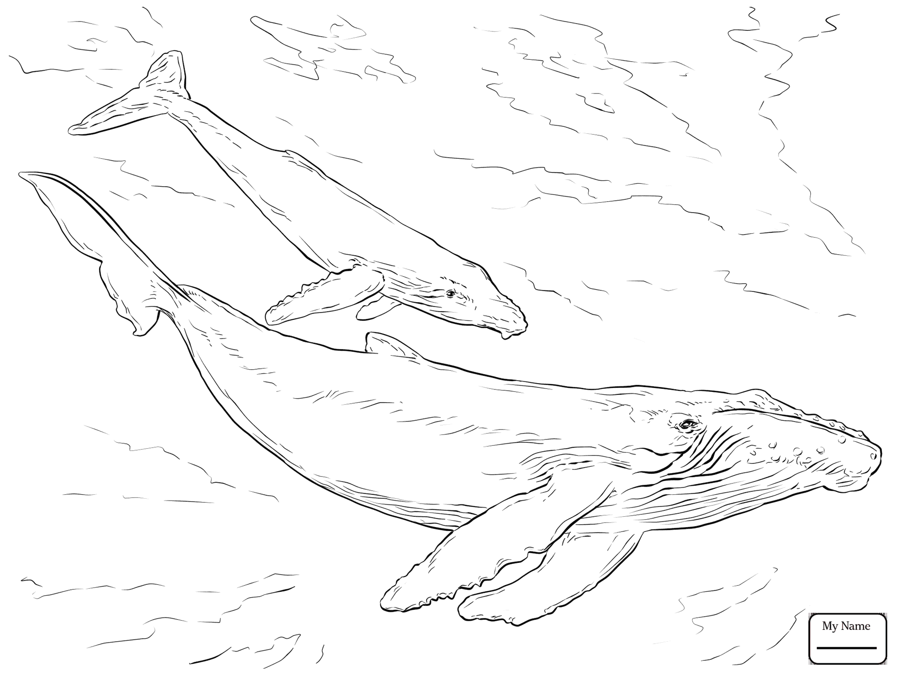 1837x1378 Whales Mammals Blue Whale Coloring Pages