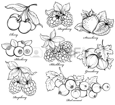 Blueberry Bush Drawing