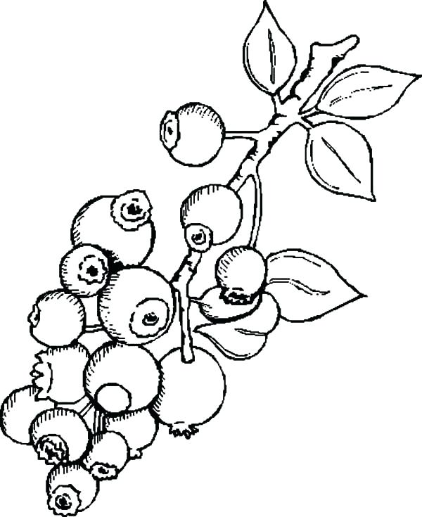 600x735 Blueberry Coloring Page Blueberry Bush Lots Of Blueberry Bush