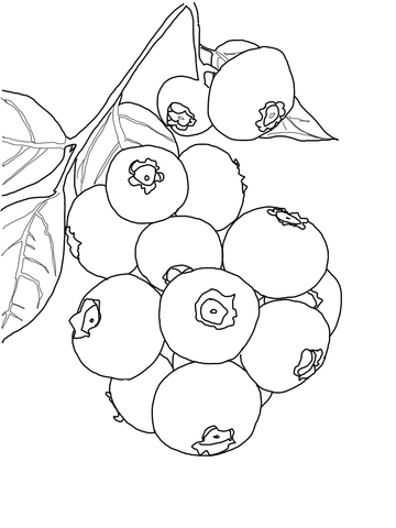360x480 Blueberry Bush Coloring Page Free Printable Coloring Pages