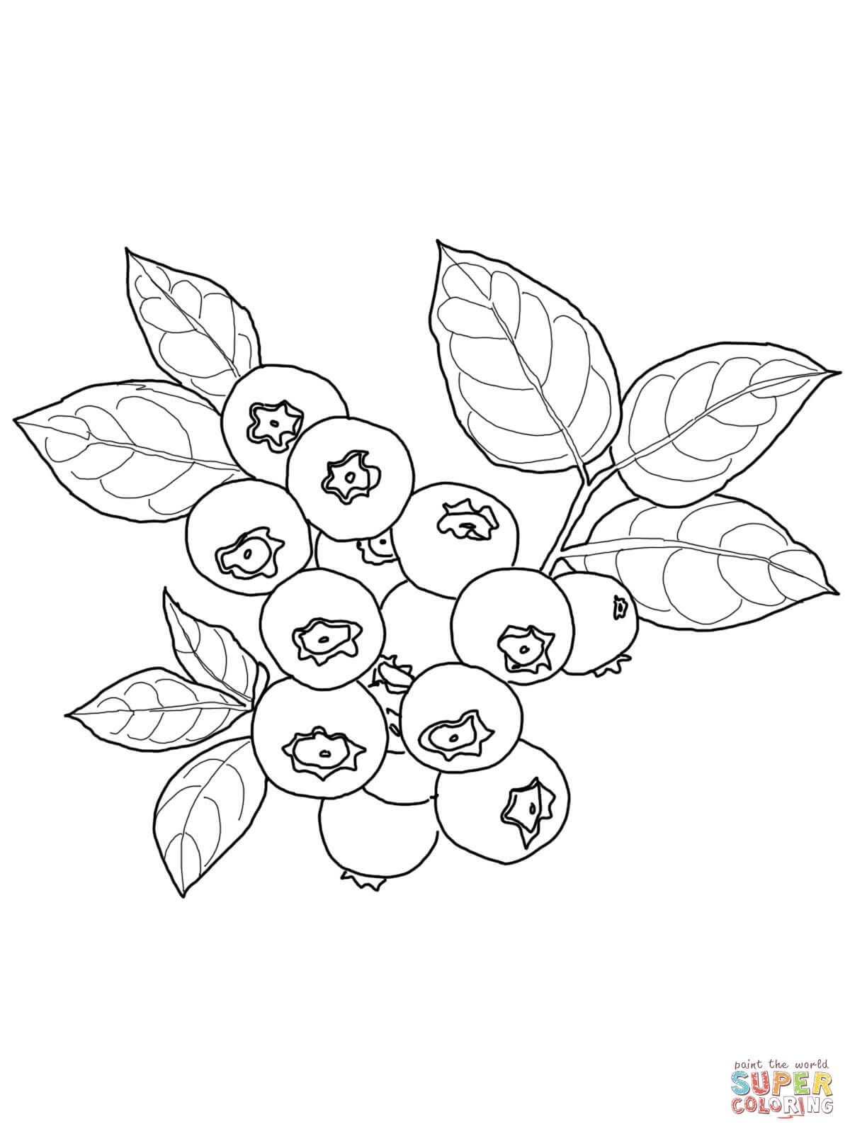 1200x1600 Blueberry Coloring Page From Blueberry Category. Select From 26977