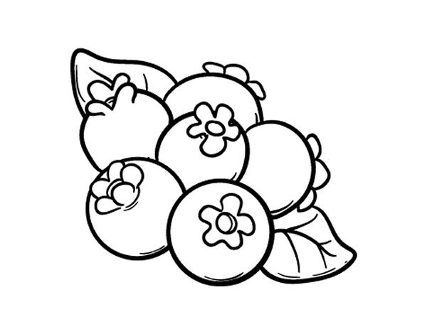 600x470 Coloring Pages Blueberry, Printable For Kids Amp Adults, Free