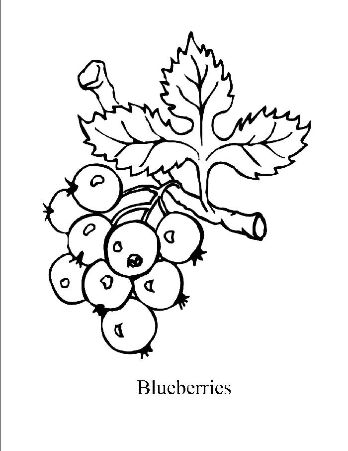 700x906 20 Blueberry Coloring Pages To Print For Kids Mandala Coloring