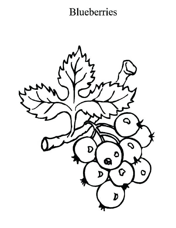 600x777 Blueberry Coloring Page Blueberry Muffin Coloring Pages Blueberry