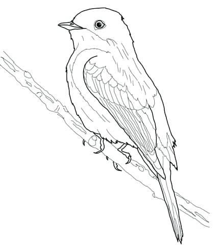 431x480 Eastern Bluebird Coloring Page Also Mountain Bluebird Coloring