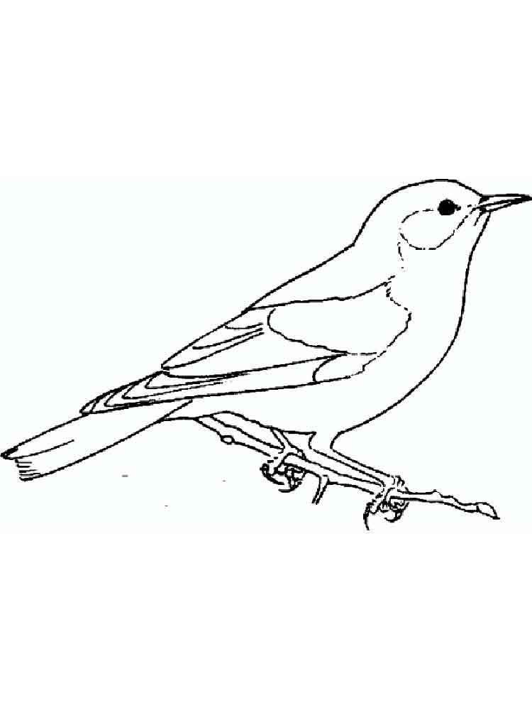 This is an image of Persnickety Bluebird Coloring Page