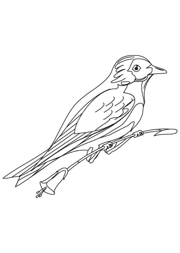 613x860 Mountain Bluebird Coloring Page Download Free Mountain Bluebird