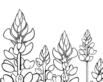 Beautiful Bluebonnet Flower Coloring Page Images - New Coloring ...