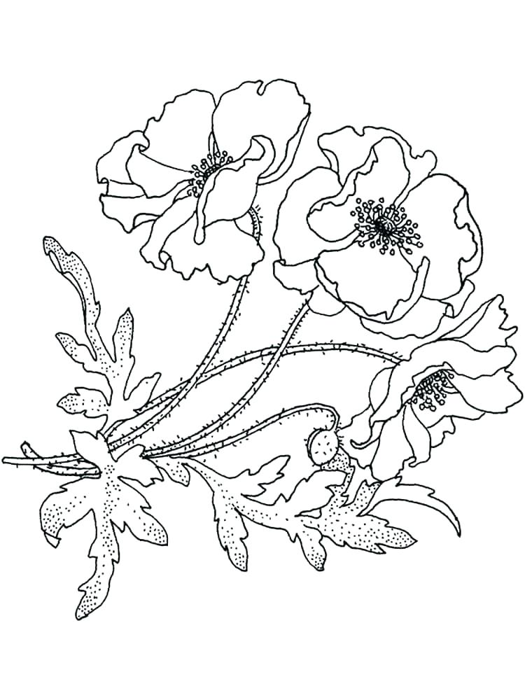 Bluebonnet Flower Drawing at GetDrawings.com | Free for personal use ...
