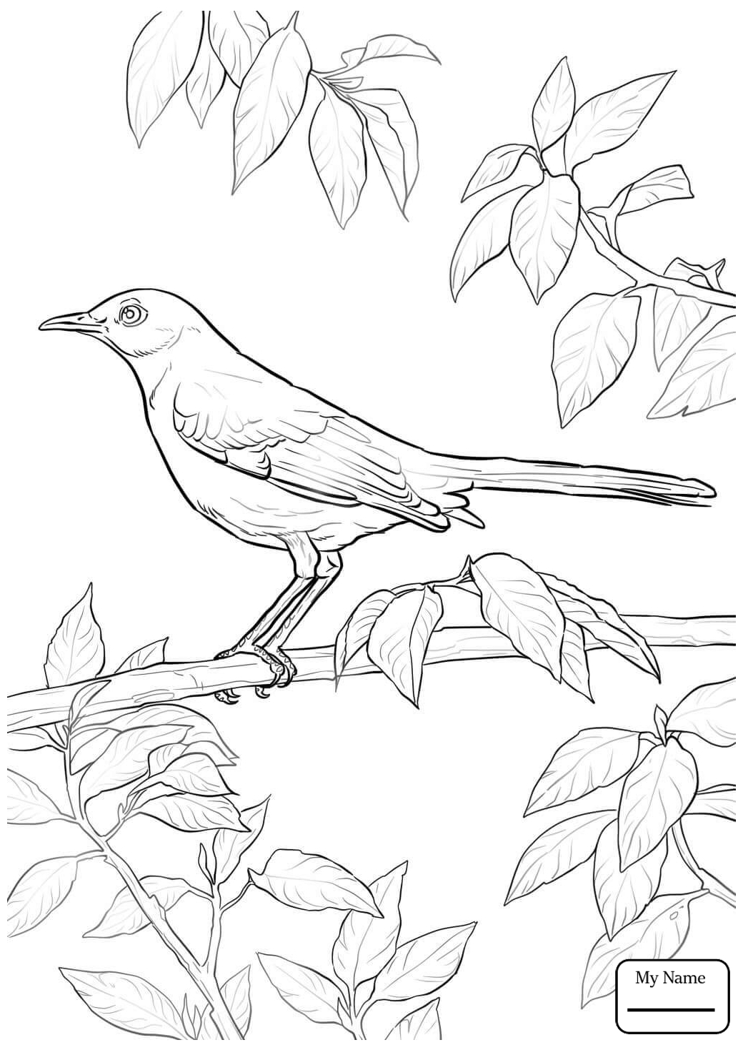 1040x1469 Coloring Pages Mockingbird Bluebonnet Texas State Bird