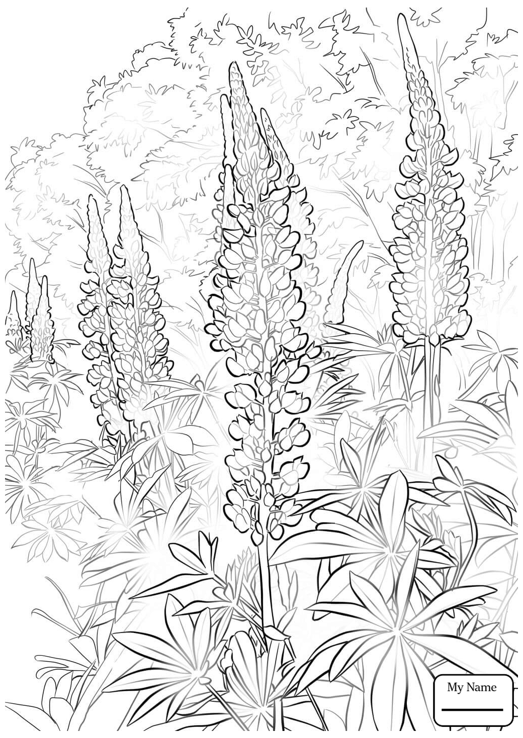 1040x1469 Bluebonnet Flower Flowers Coloring Pages For Kids