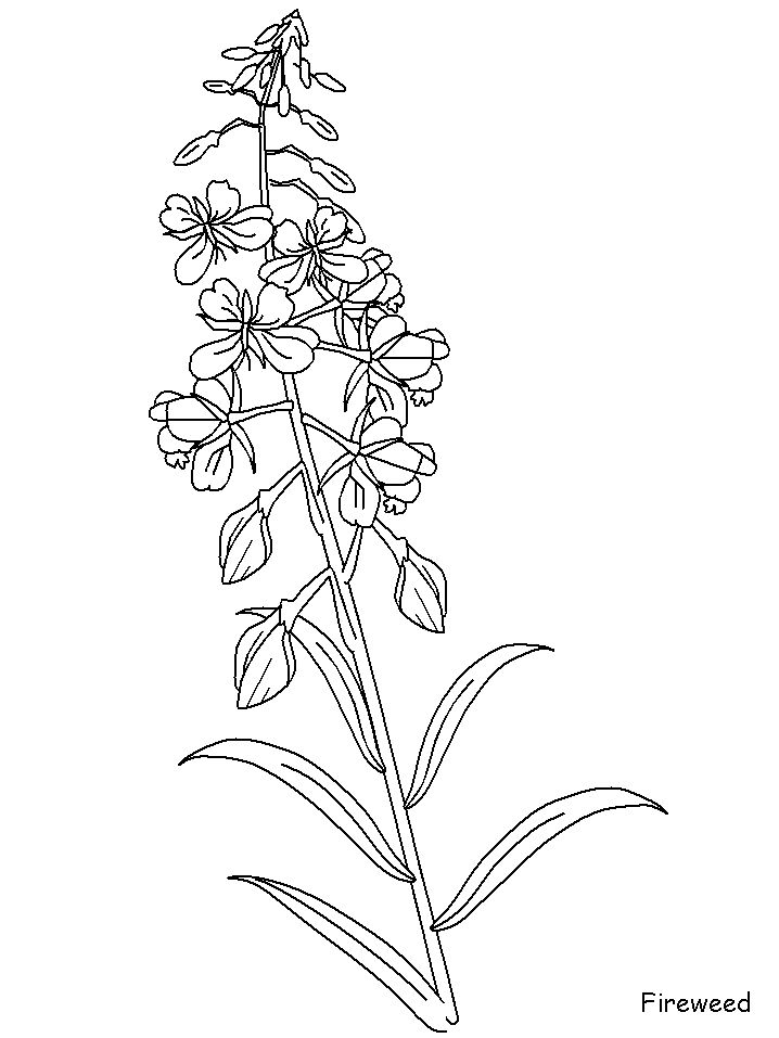 Bluebonnets Drawing_ at GetDrawings.com | Free for personal use ...