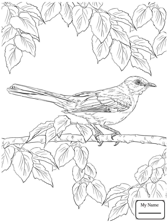 918x1224 Mockingbird Birds Mockingbird Bluebonnet Texas State Bird