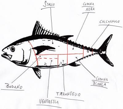 400x356 Commercial Fishing Trolling Is Also Used In Small Scale Commercial