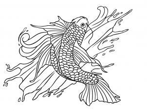 Bluegill Drawing