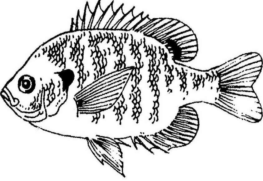 843x580 Fish