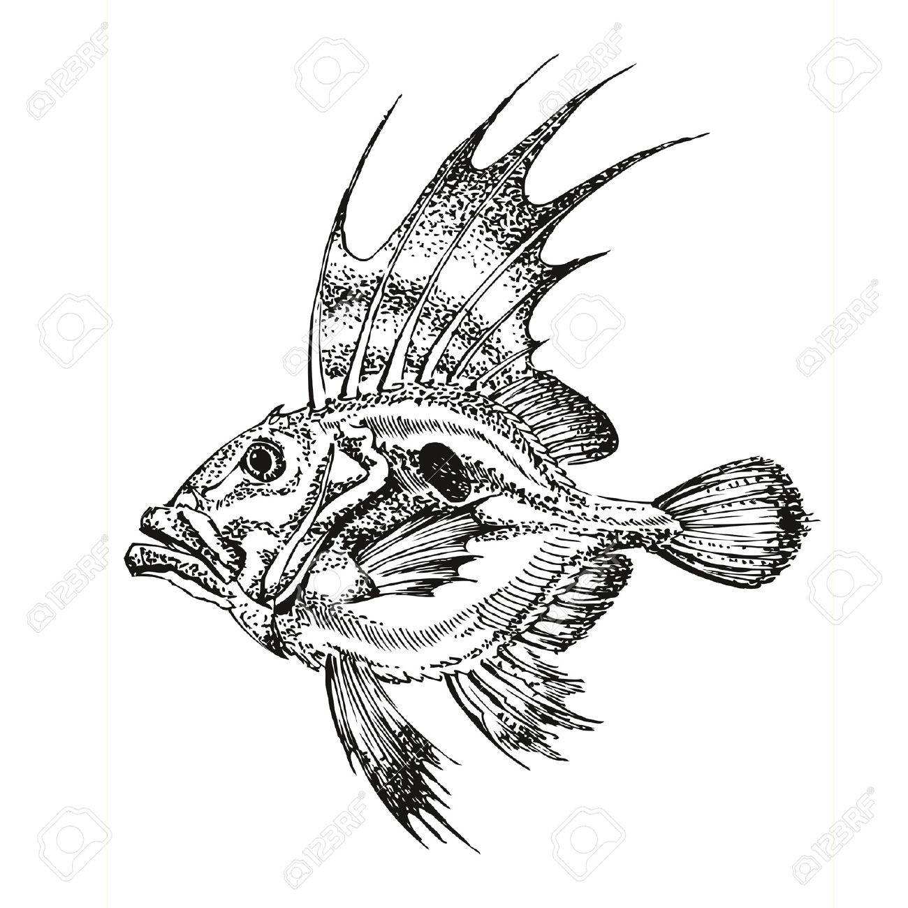 1300x1300 Ink Drawing Fish, Translated Into A Vector Royalty Free Cliparts