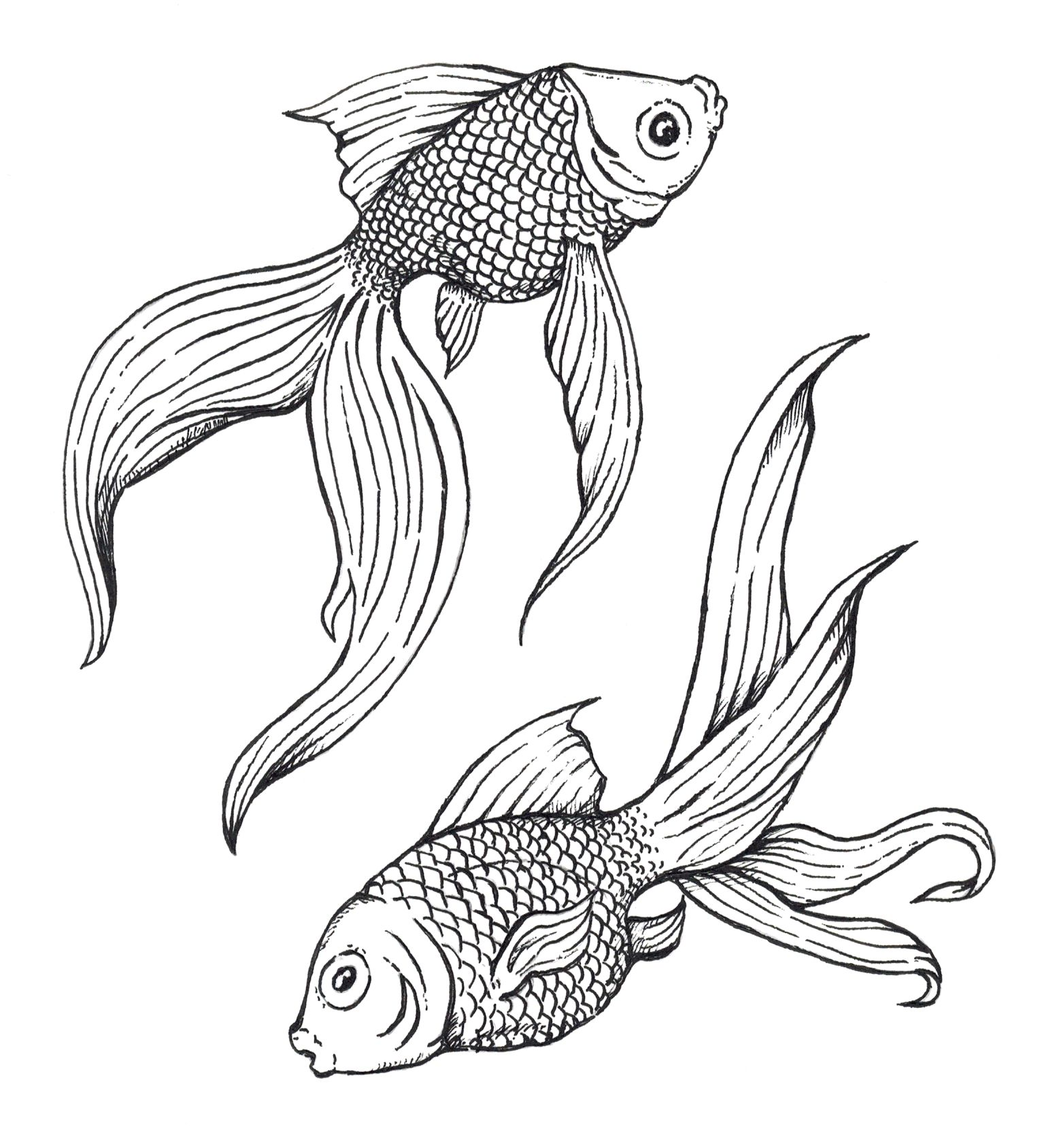 1532x1688 Pen And Ink Drawings Of Fish Cool Pen And Ink Drawings
