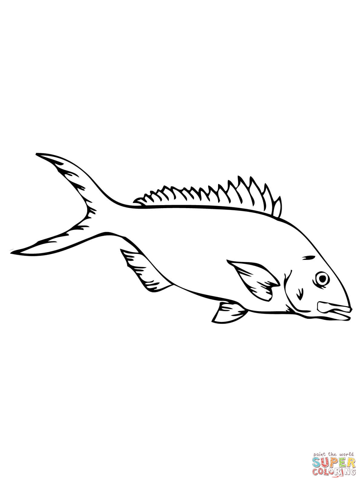 1200x1600 Yellow Perch Coloring Pages Crappie Coloring Pages
