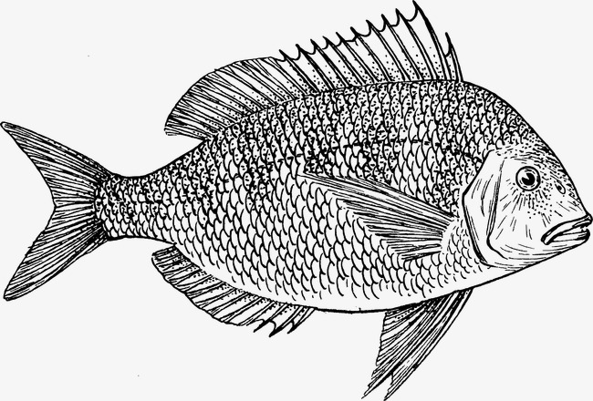 650x440 Fish, Flake, Water, Food Png Image And Clipart For Free Download