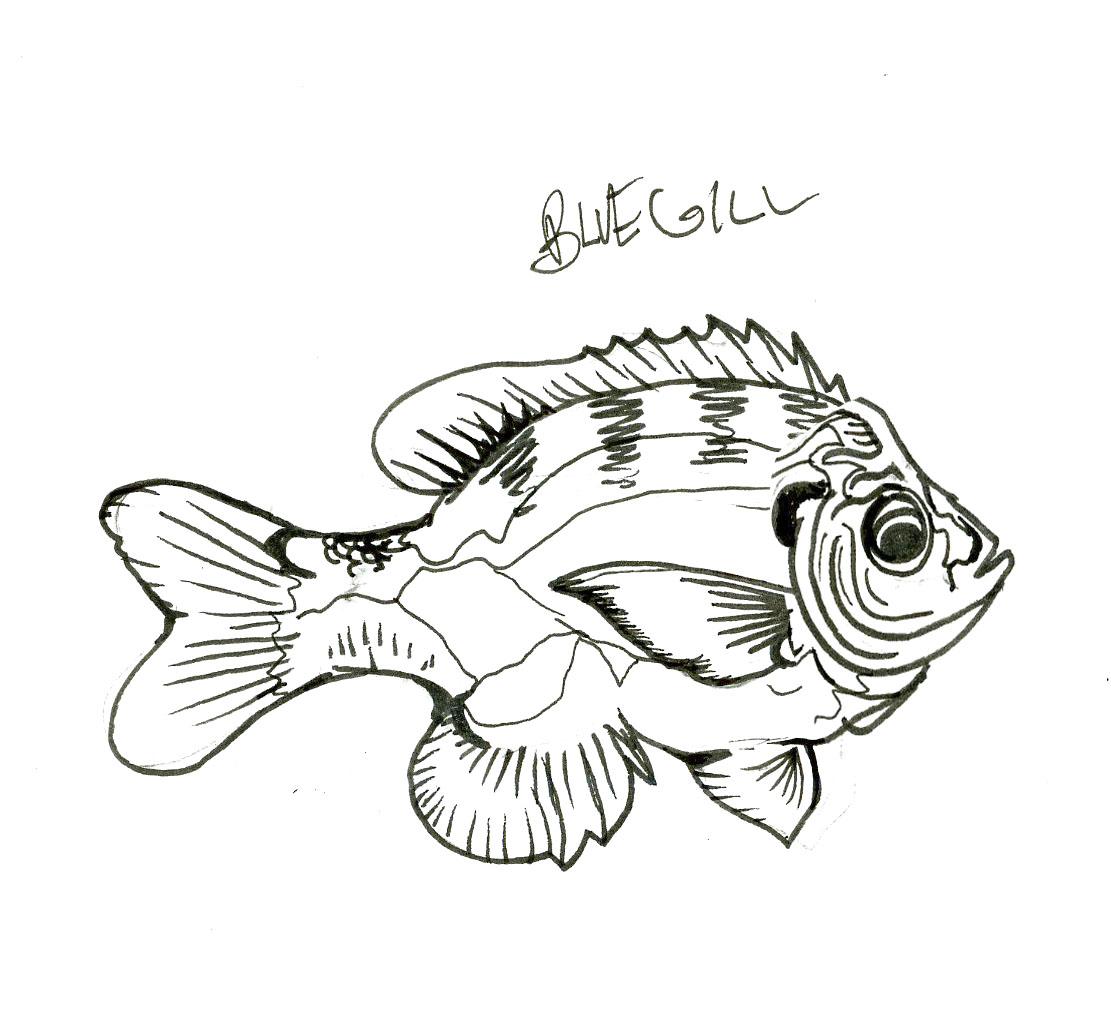 1111x1023 Fishing Illustration And Design