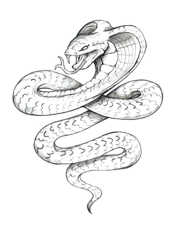 Boa Constrictor Drawing at GetDrawings.com | Free for personal use ...