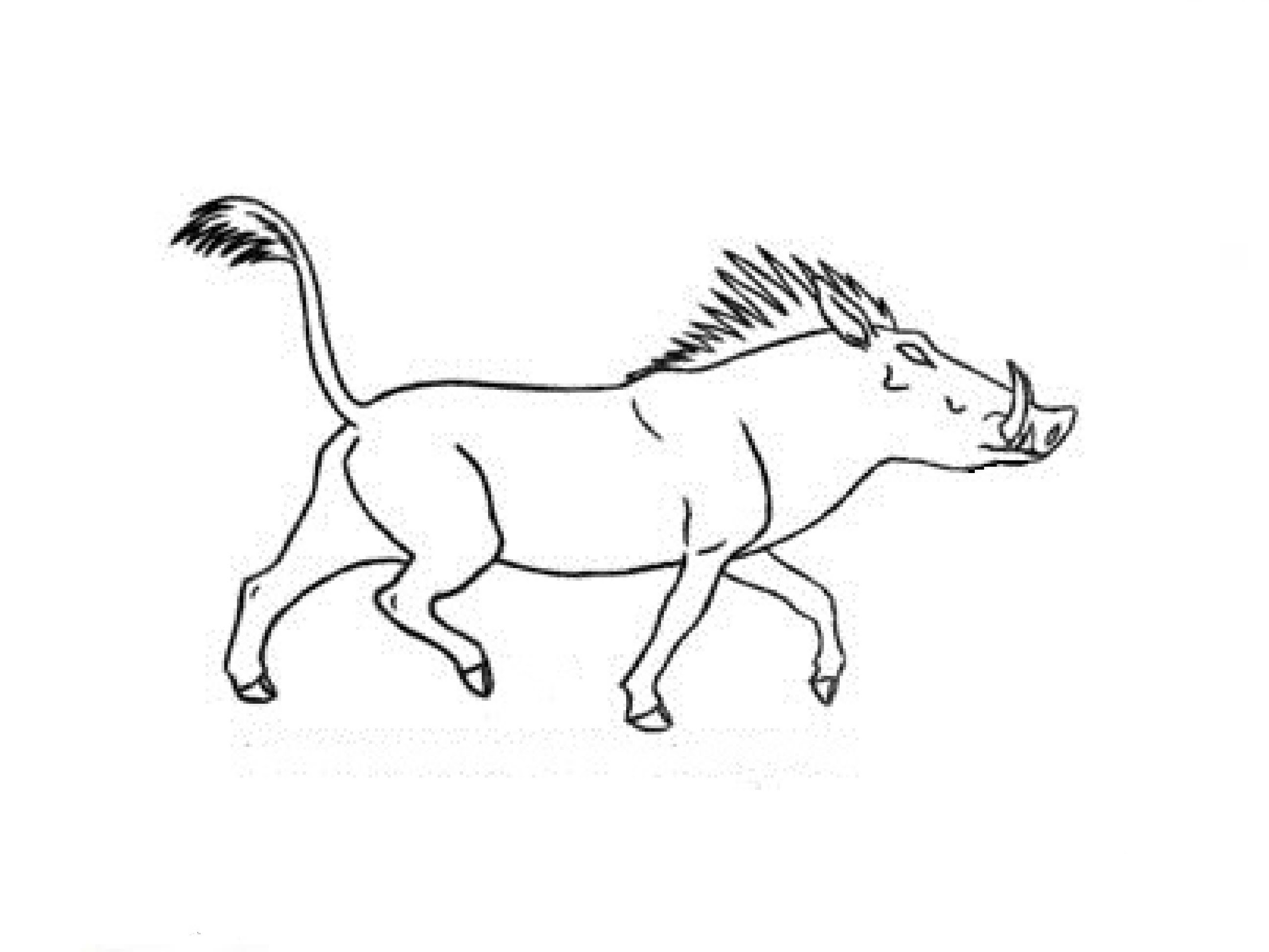 2592x1944 How To Draw A Boar