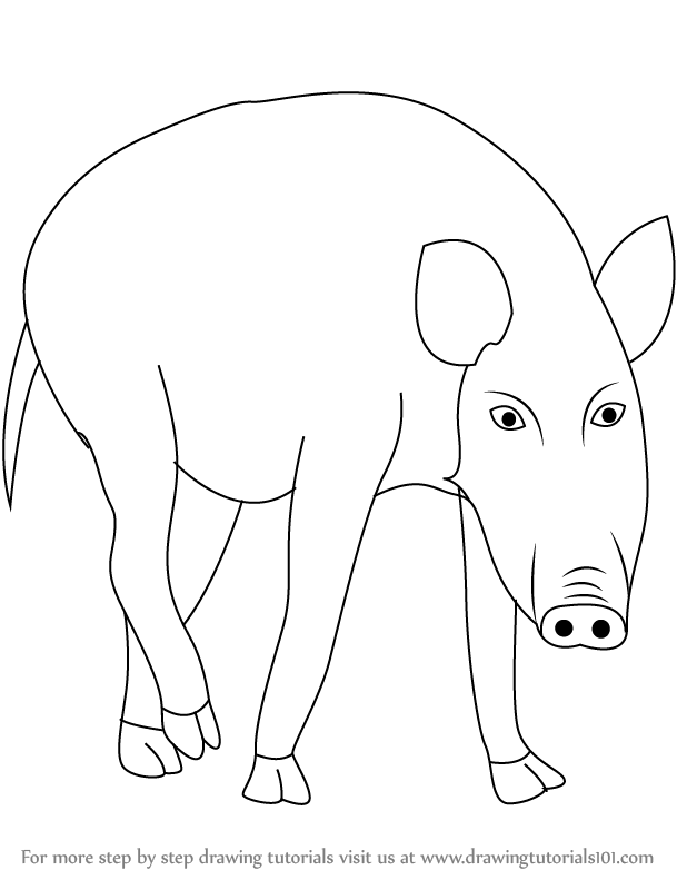 618x791 Learn How To Draw A Wild Boar (Wild Animals) Step By Step