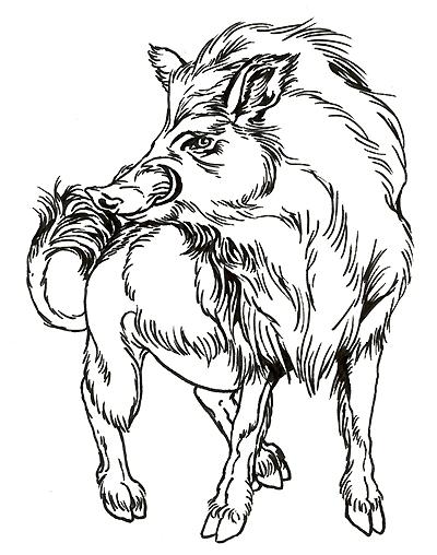 400x508 Line Drawing Of Boar Doodles