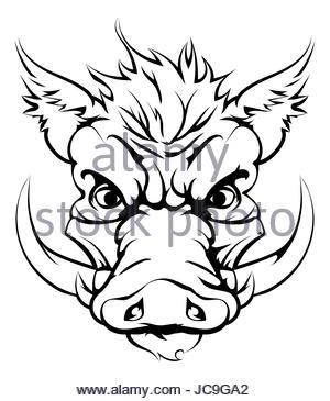 Boar Head Drawing