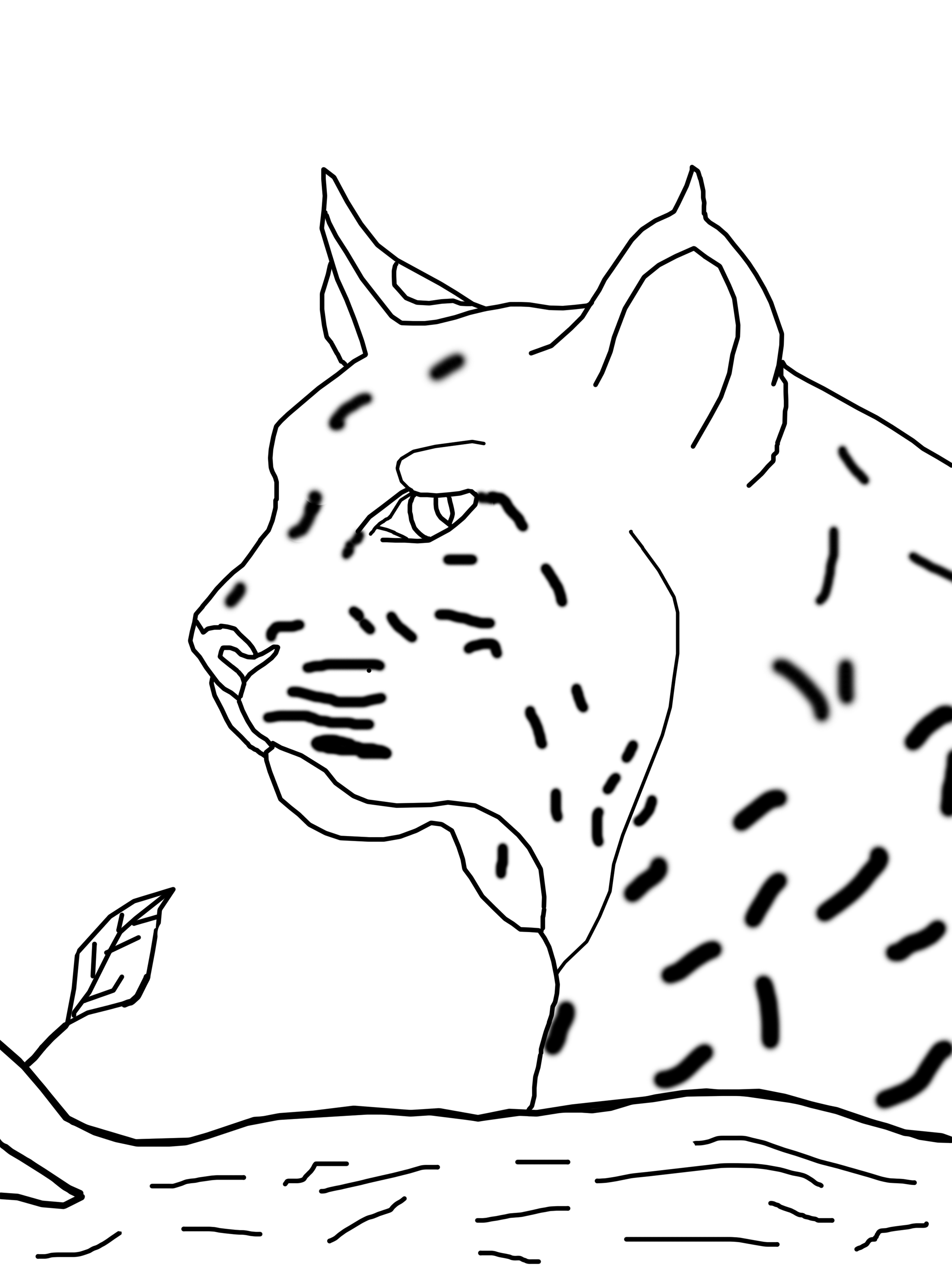 texas state bobcats coloring pages - photo#5