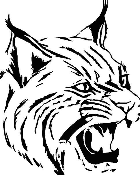 485x608 Tiger, Cat, Feline, Wildcat, Head, Skull, Face, Animal, Bobcat