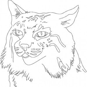 300x300 Bobcat Ready To Hunt Coloring Pages Best Place To Color