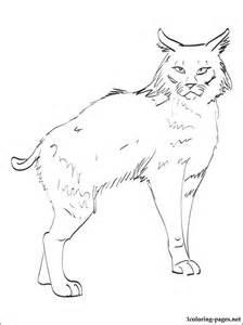 224x300 Crouching Bobcat Coloring Page Supercoloringcom, Bobcats Drawing