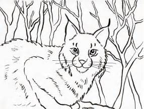 286x217 How To Draw Bobcats, Bobcat, Step By Step, Forest Animals, Bobcats