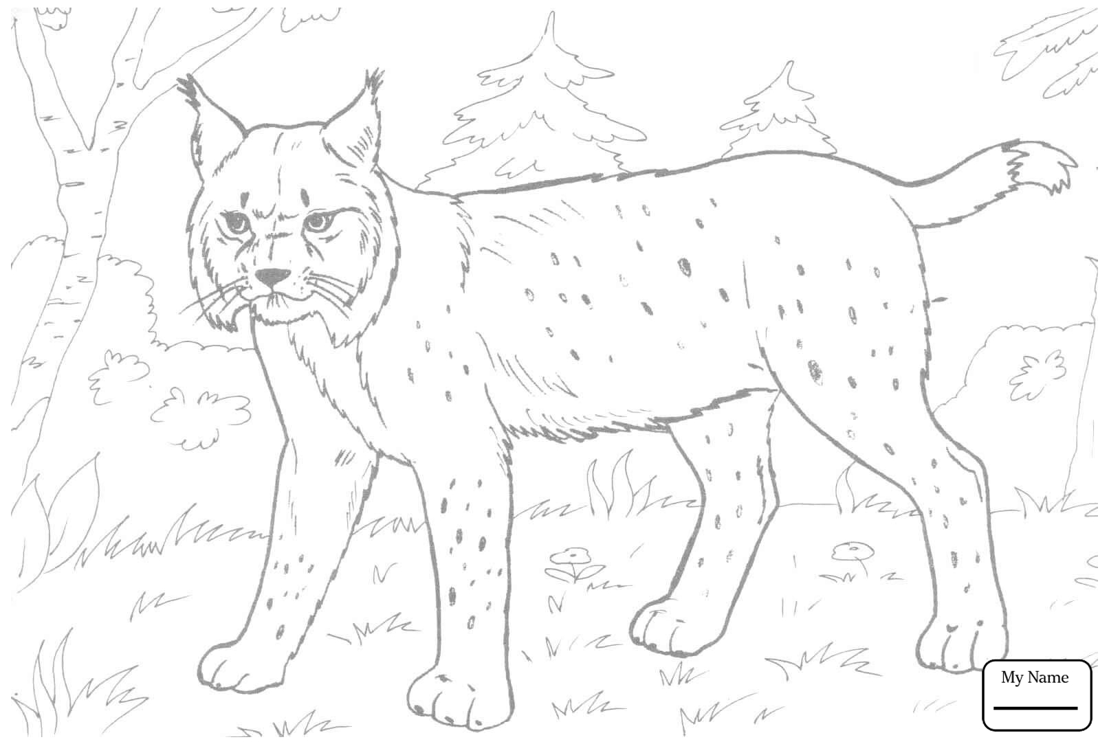 1613x1083 Bobcats Lynx Mammals Coloring Pages For Kids