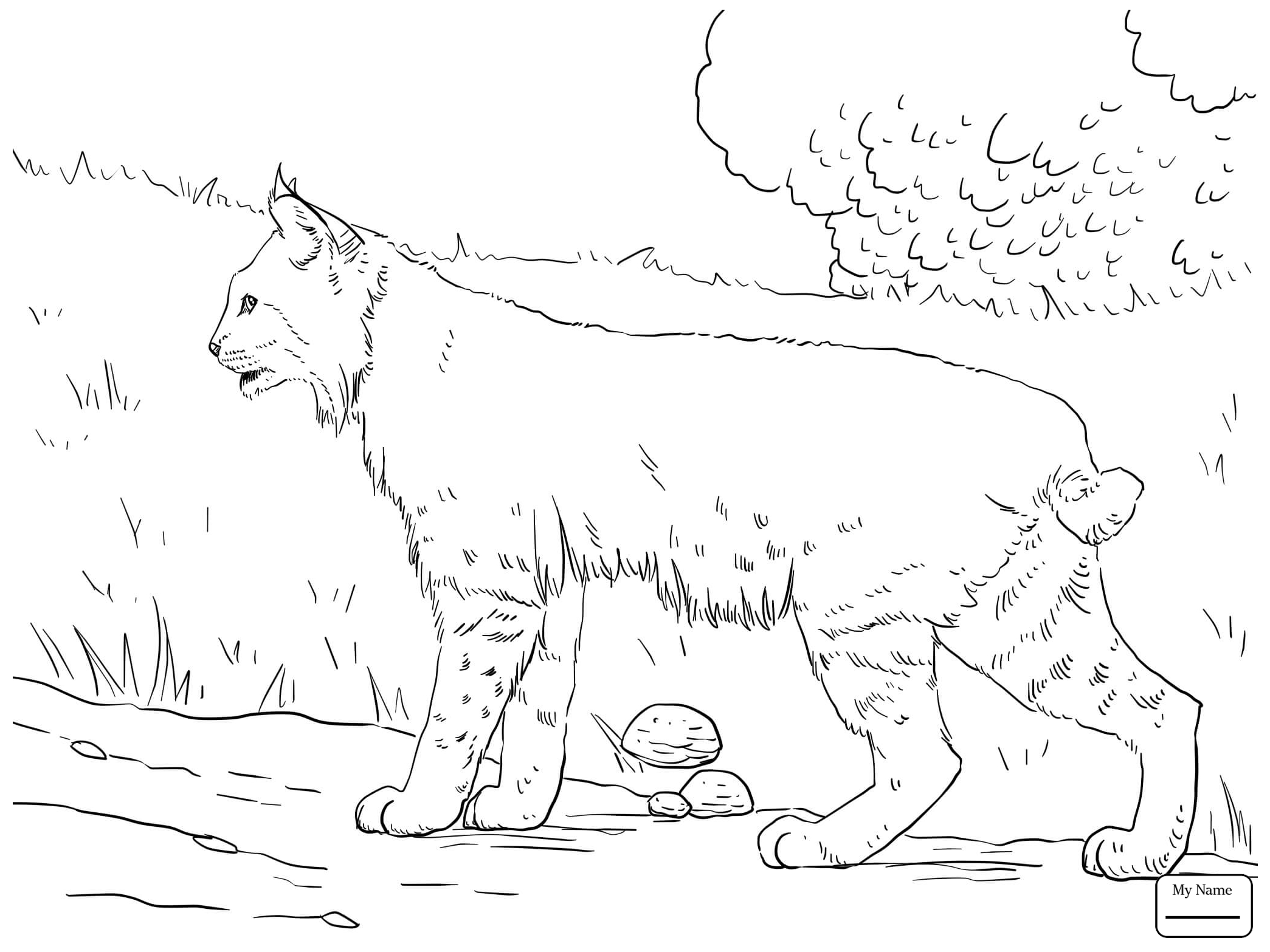 2089x1567 Bobcats Mammals Bobcat In The Forest Coloring Pages