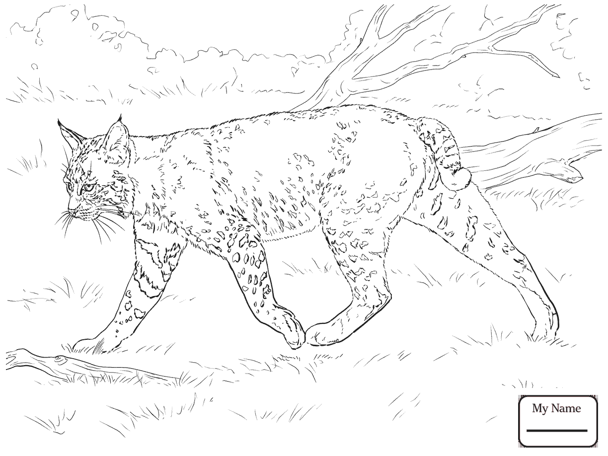 1224x918 Coloring Pages For Kids Laying Bobcat Mammals