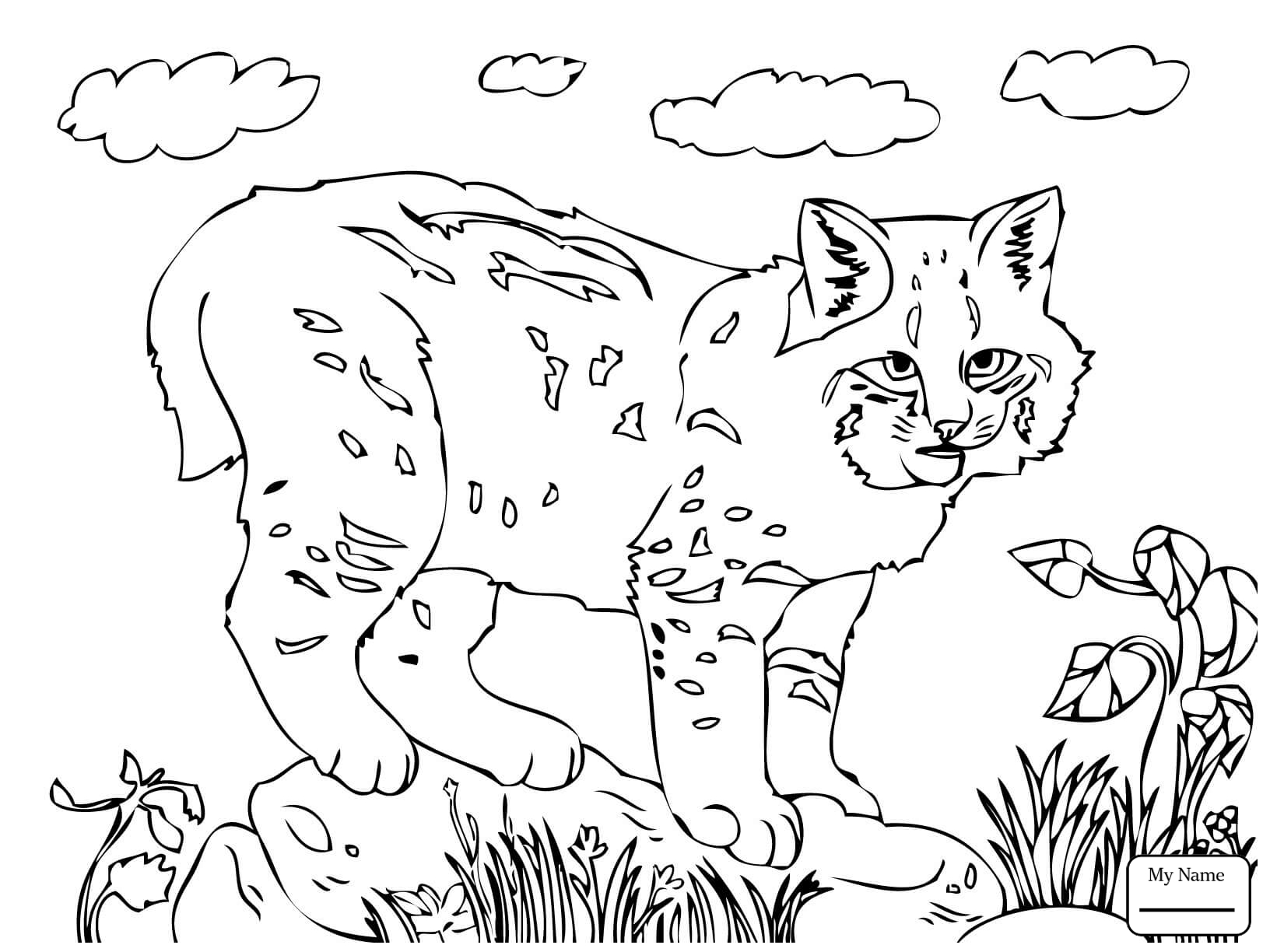 1632x1224 Mammals Lynx Cat Bobcats Coloring Pages For Kids