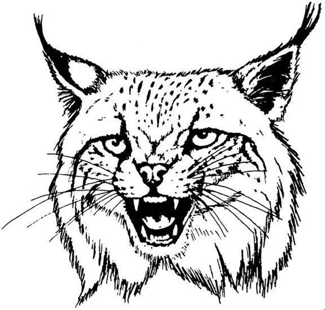 640x611 Bobcat Head Printable Wild Bobcats